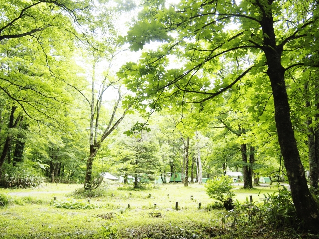 キャンプ場の画像